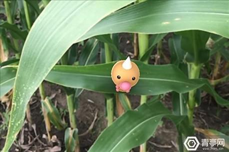 5_reasons_pokmon_good_farmers_1_636039310049951063_640