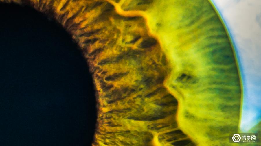 融资220万美元,Vivid Vision发展视力障碍者的VR