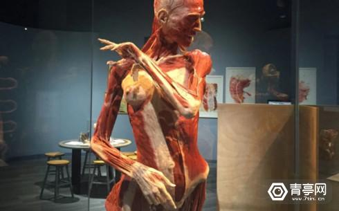 body-worlds-decoded