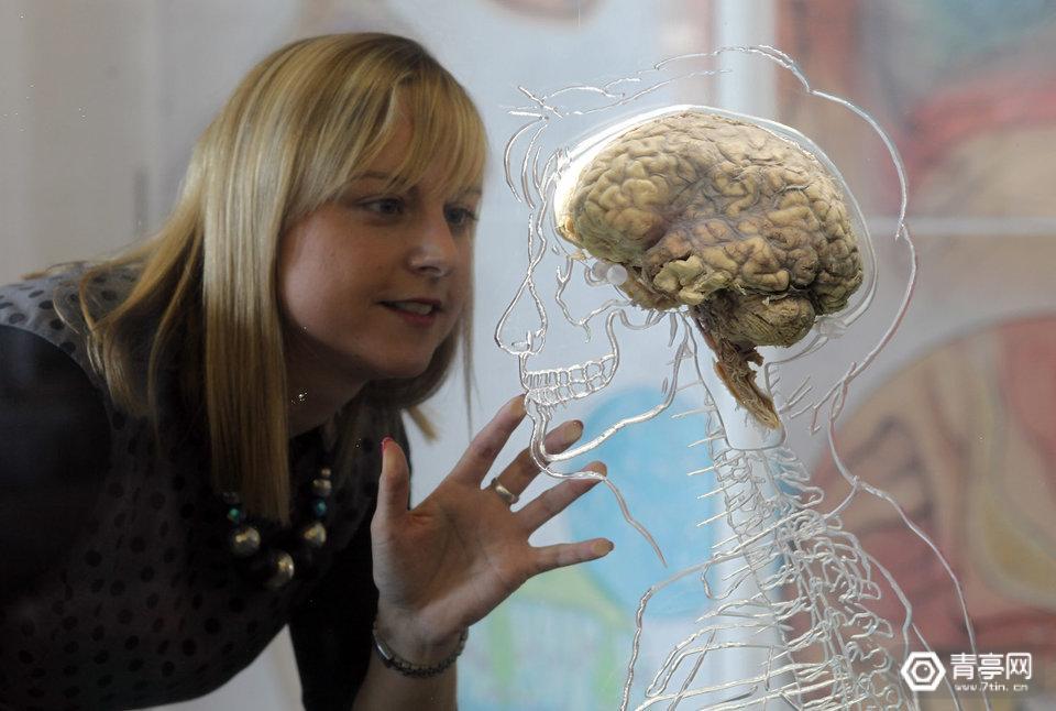 这家初创公司研发大脑冷冻技术,但需要活体取脑保存