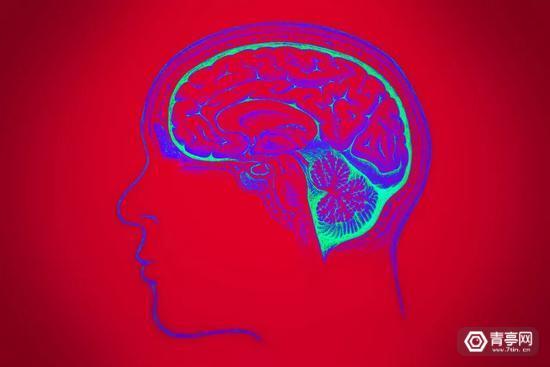 """自然界那么大,为何唯独""""人""""进化出如此强悍的大脑"""