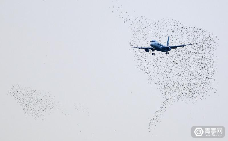 An Alitalia plane approaches to land as starlings fly at Fiumicino international airport in Rome