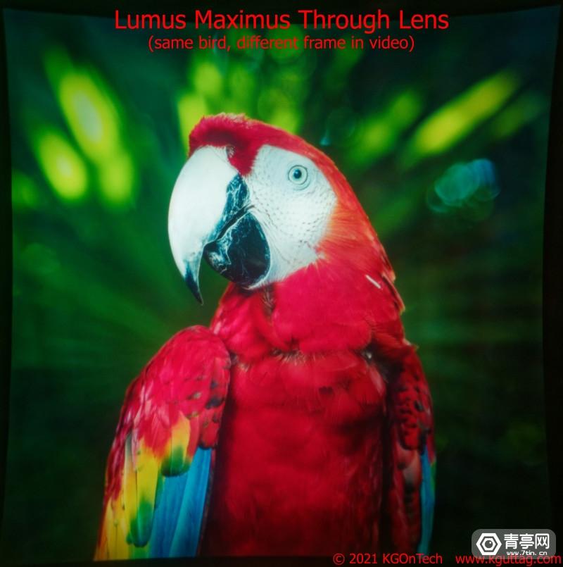 Maximus-Bird-Picture